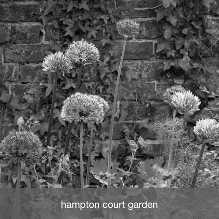 hampton court garden project